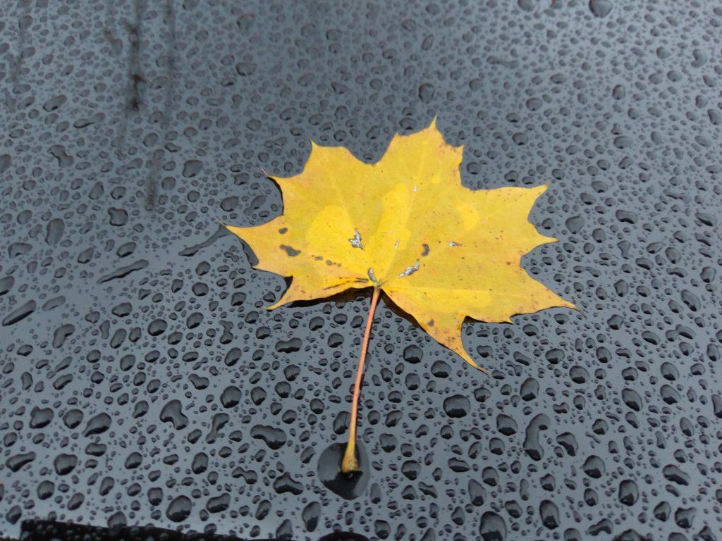 Blatt auf feuchter Oberfläche